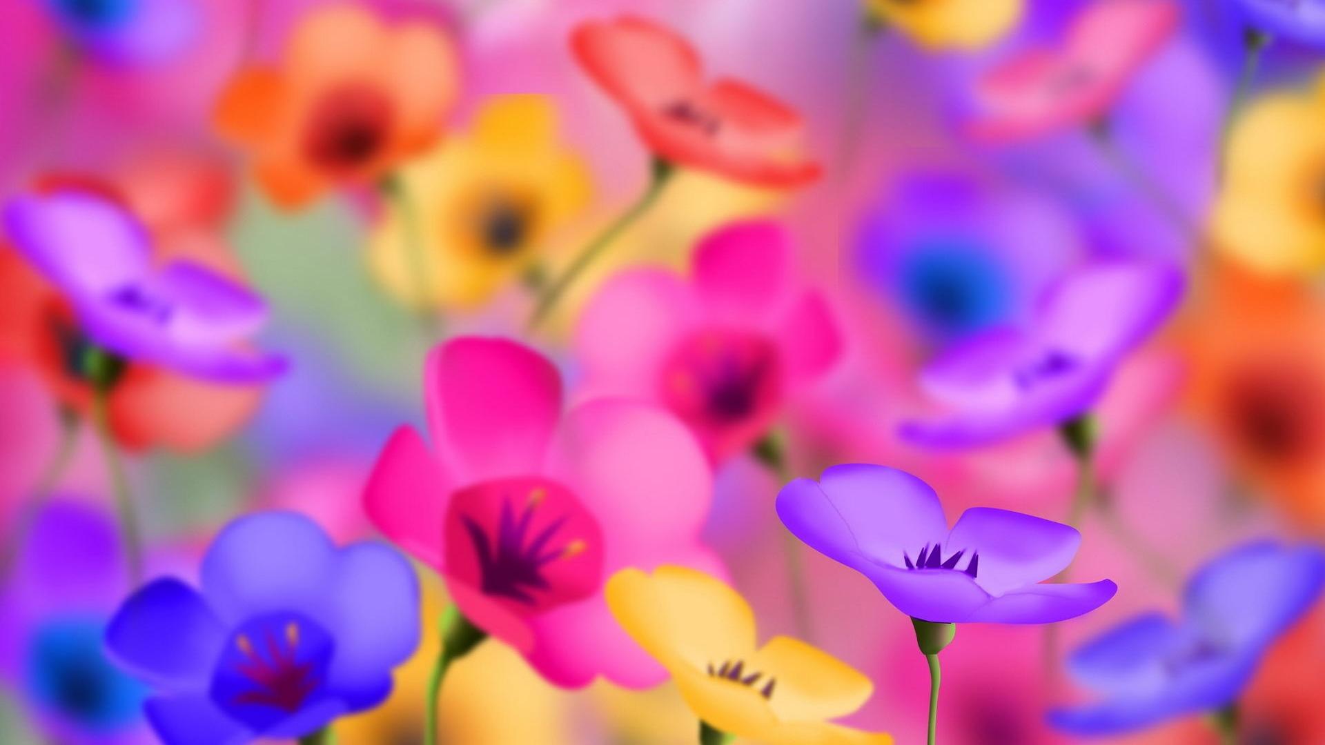 Cute Beautiful Flowers Wallpapers Cool HD 1920x1080