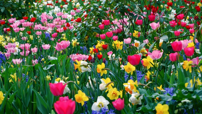 Wonderful D Hd Wallpapers Collection Wallpapermonkey Full Screen HD WallpapersCharlie 1440x810