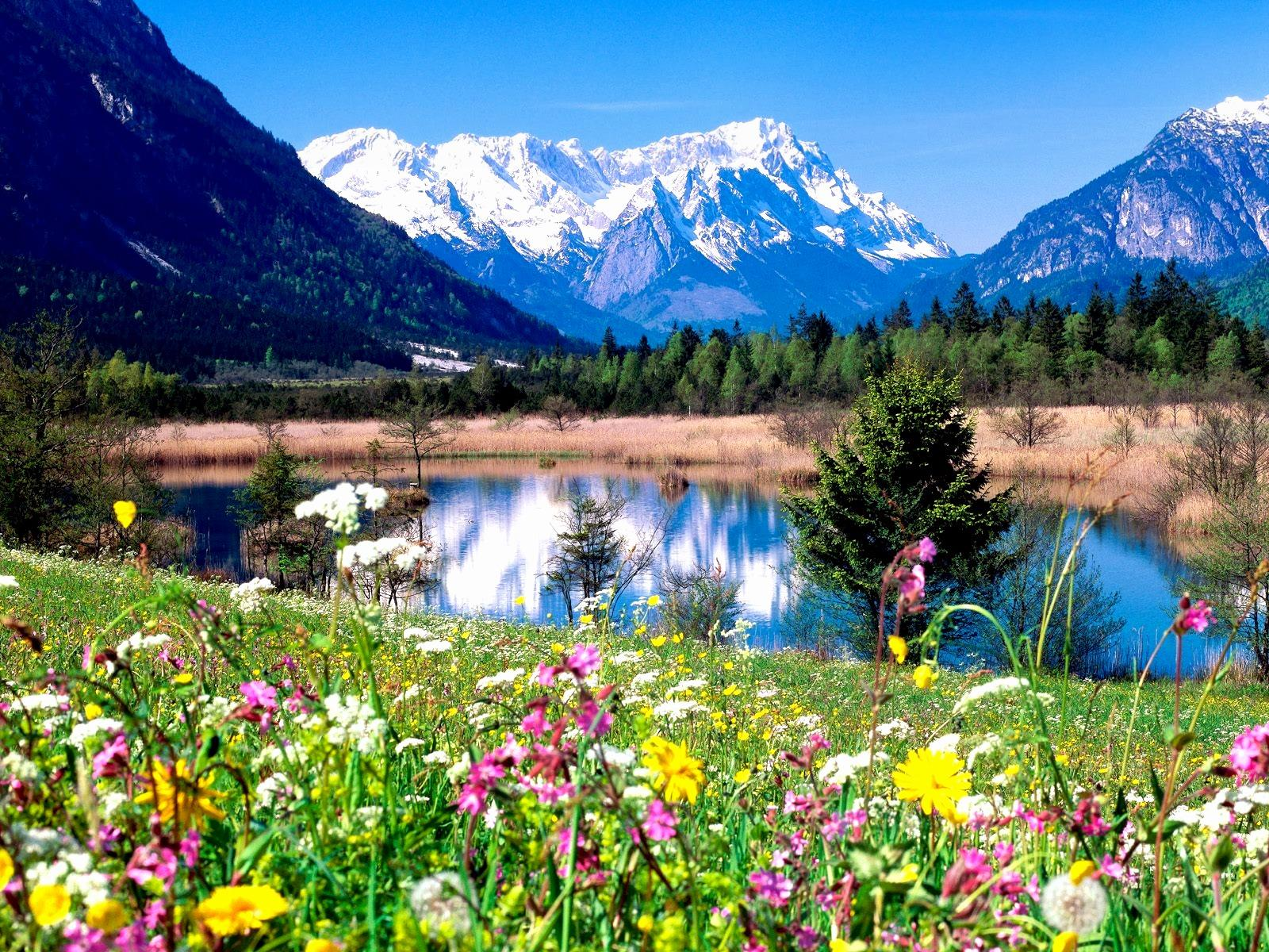 hd wallpapers 1600x1200: Spring HD Wallpapers Backgrounds Wallpaper 1600x1200
