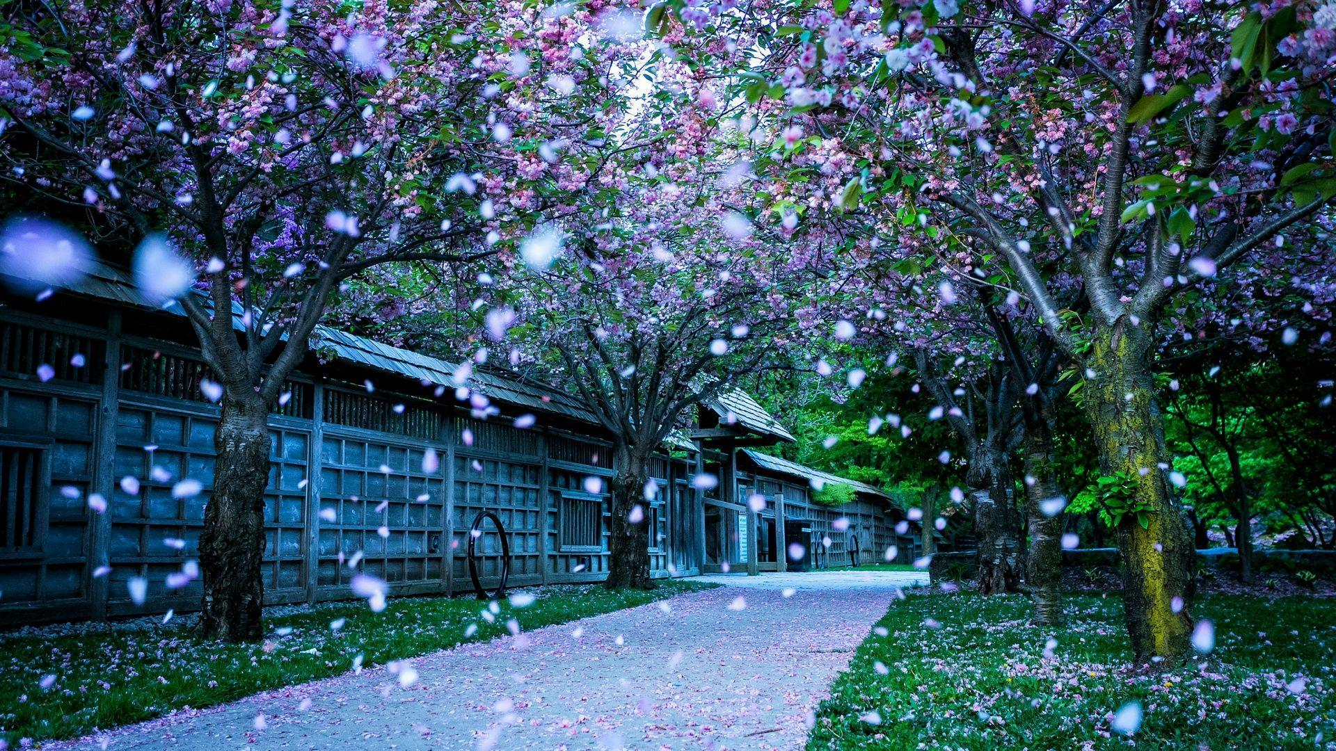 Beautiful Spring Images Download PixelsTalk Full HD P Wallpapers Desktop Backgrounds 1920x1080
