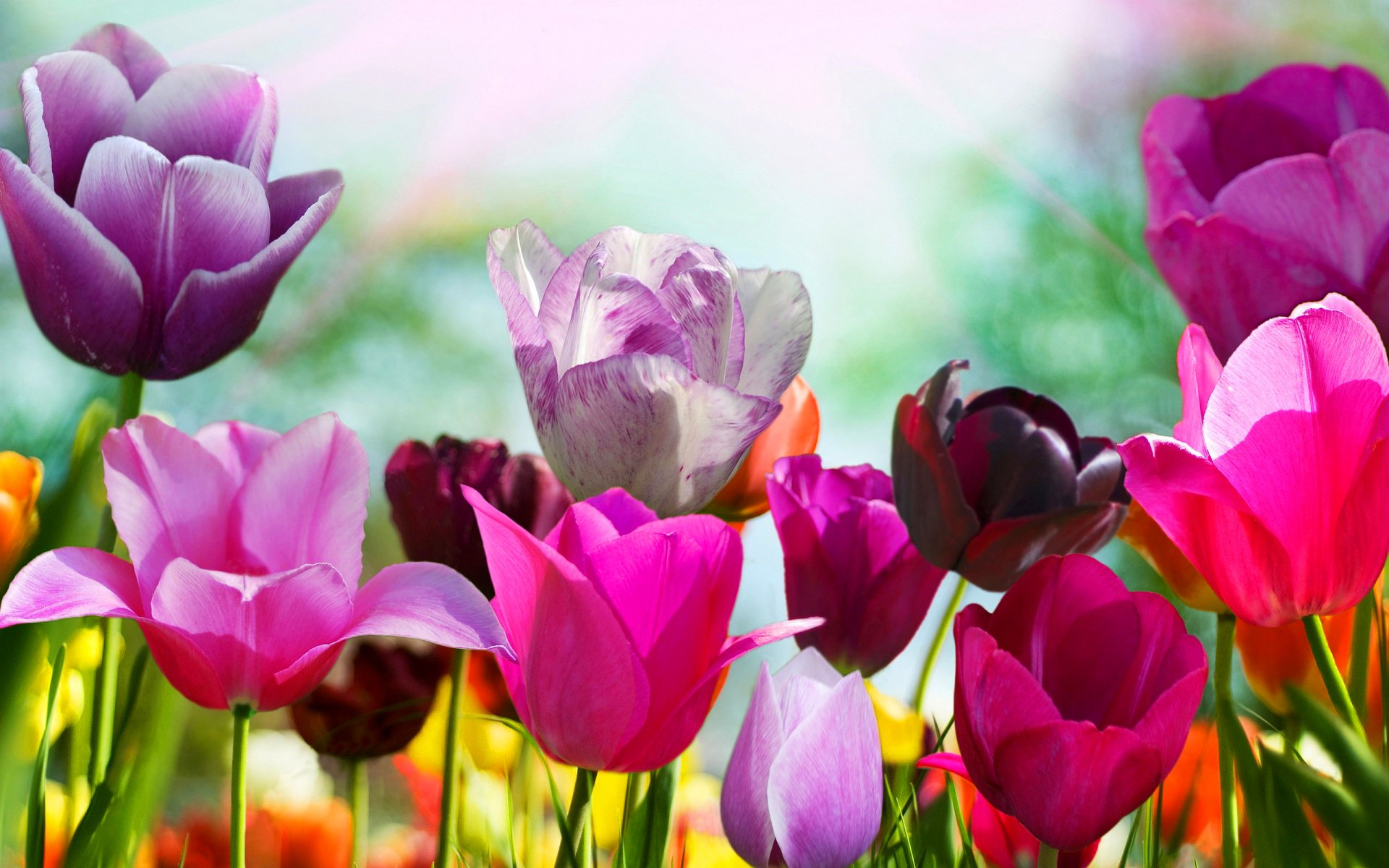 Spring Flowers Wallpapers HD Pictures  One HD Wallpaper Pictures 1920x1200