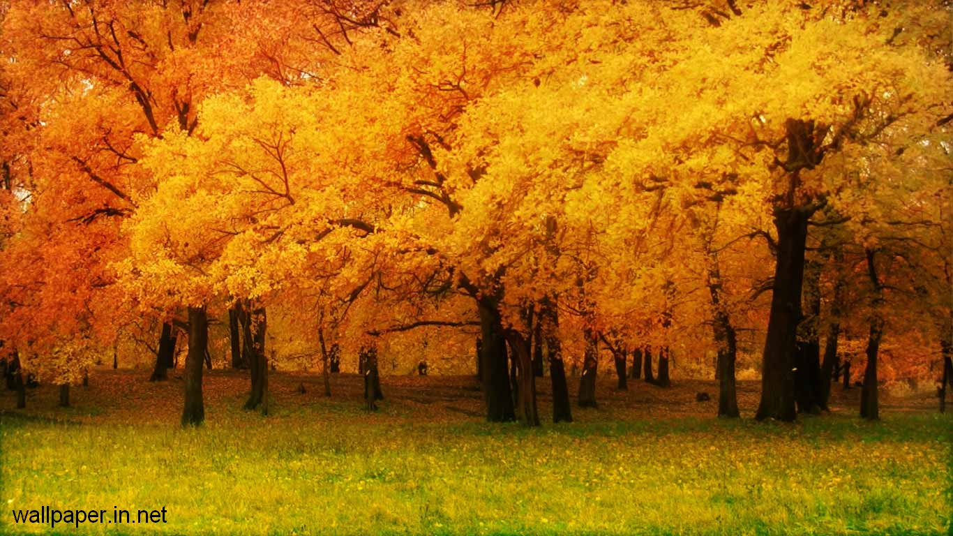 High Resolution Nature Wallpaper Free Download 1366x768