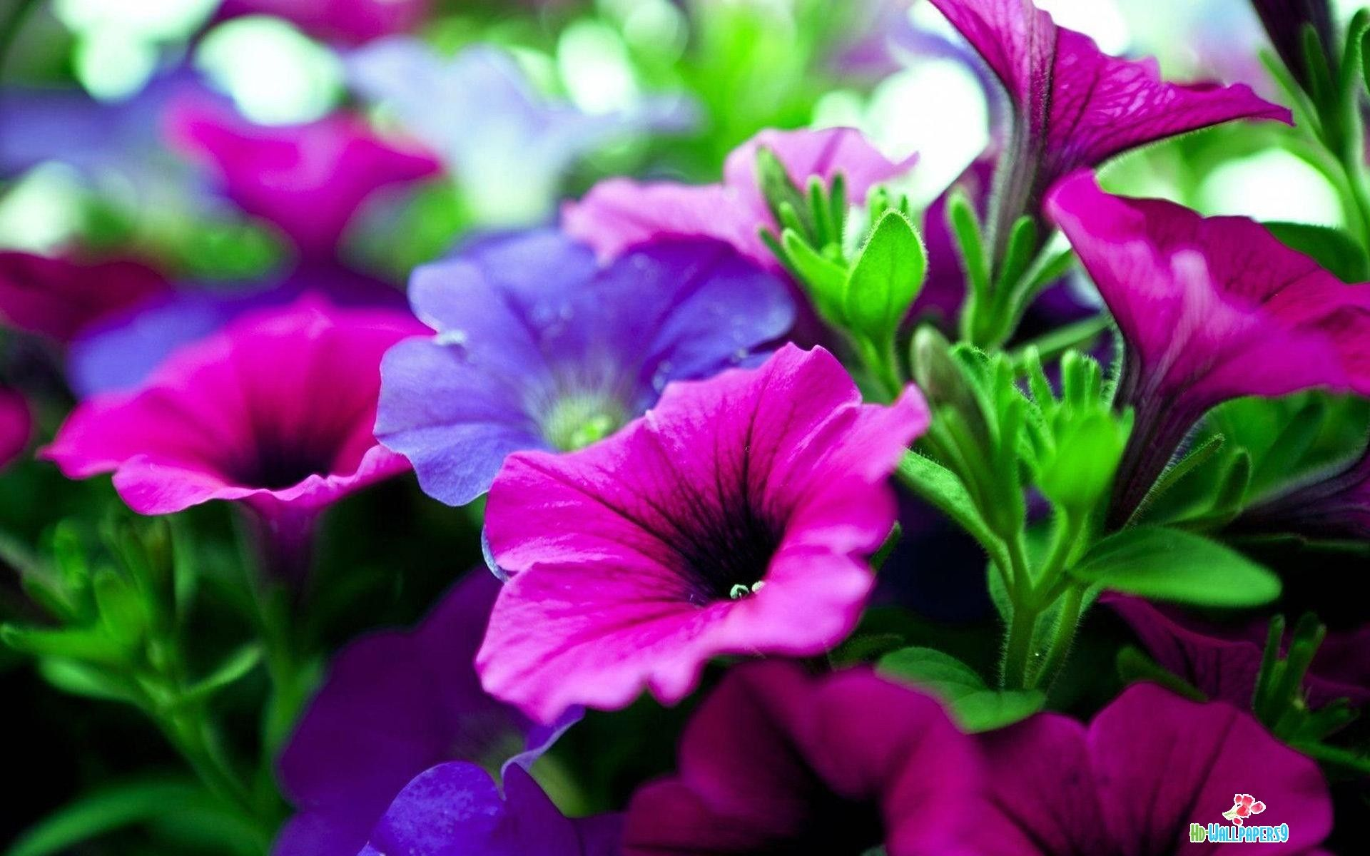 High Quality Flowers Wallpapers Flowers Ideas