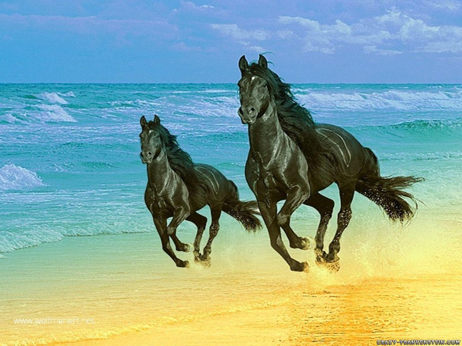 7 Running White Horse Hd Wallpaper Download Labzada Wallpaper