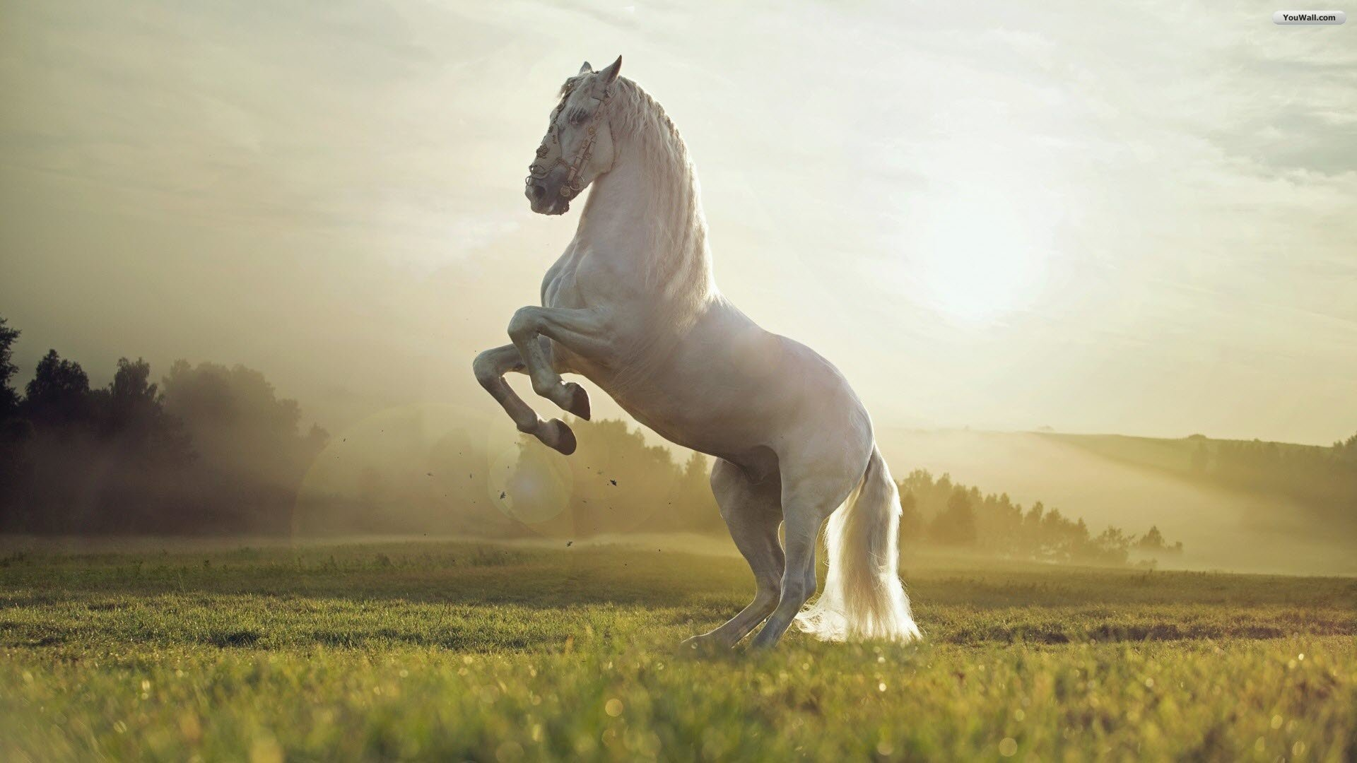 Horse Wallpapers  Best Wallpapers 1920x1080