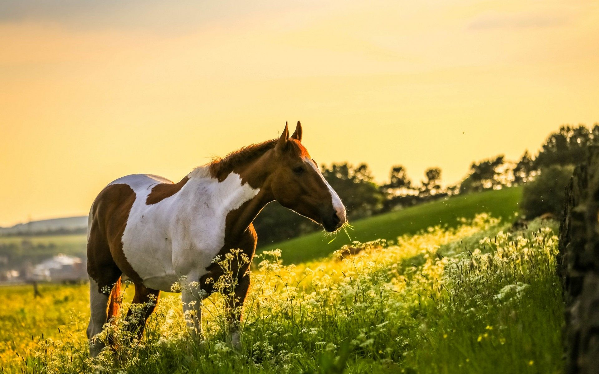 Horses Wallpapers  Android Apps on Google Play 1920x1200