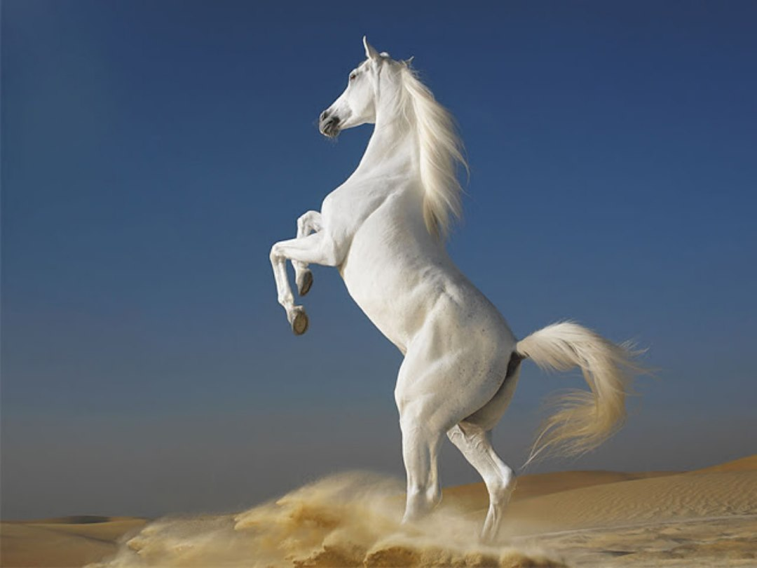 Wild Horse Wallpapers 1080x810