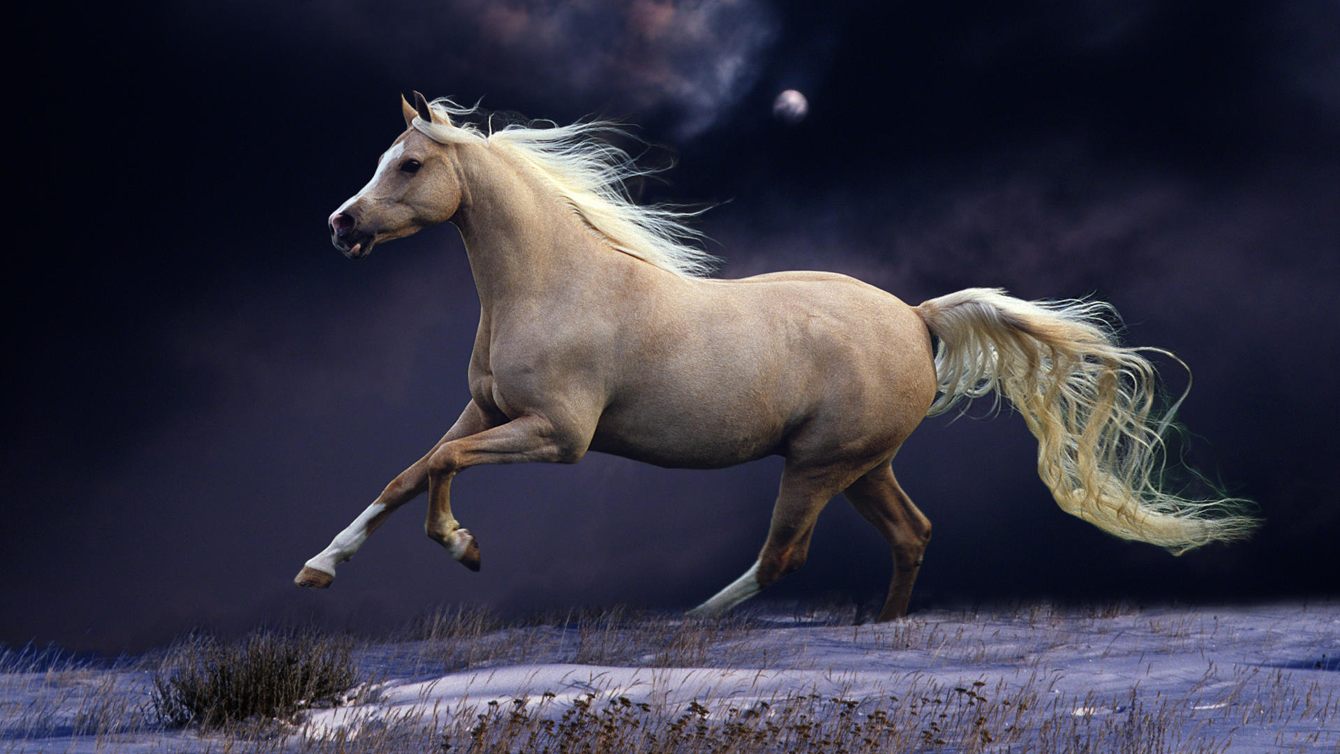 Horse wallpapers free download latest pets animals hd desktop horse wallpapers free download latest pets animals hd desktop images 1920x1080 voltagebd Choice Image
