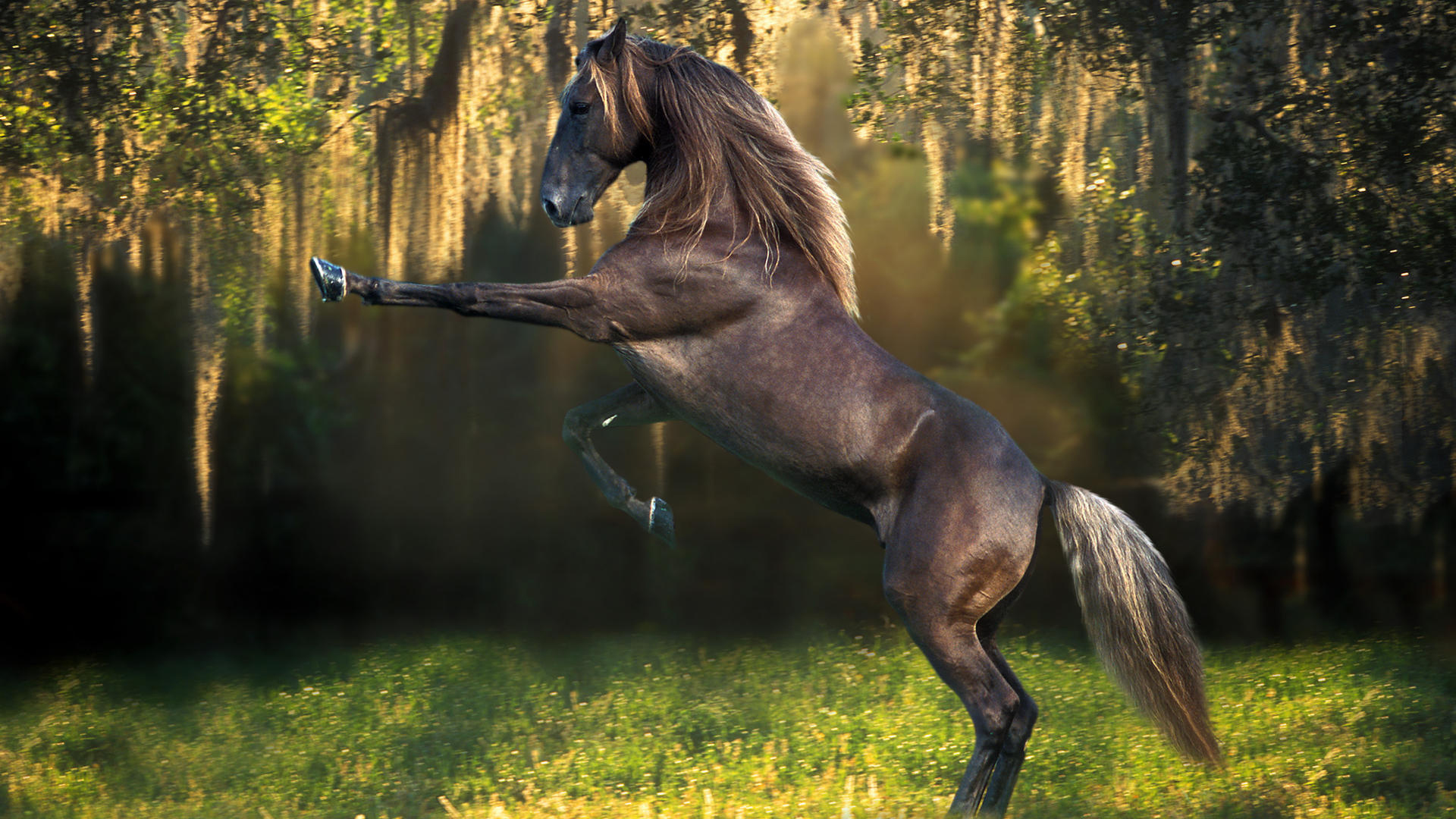 Beautiful HD Horse Wallpapers  HDWallSource WallpapersWide Seven Horse Wallpapers Group  1920x1080