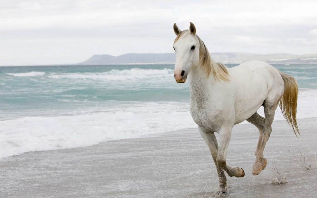 Horse Wallpapers  Free Download Latest Pets Animals HD Desktop Images 1080x675