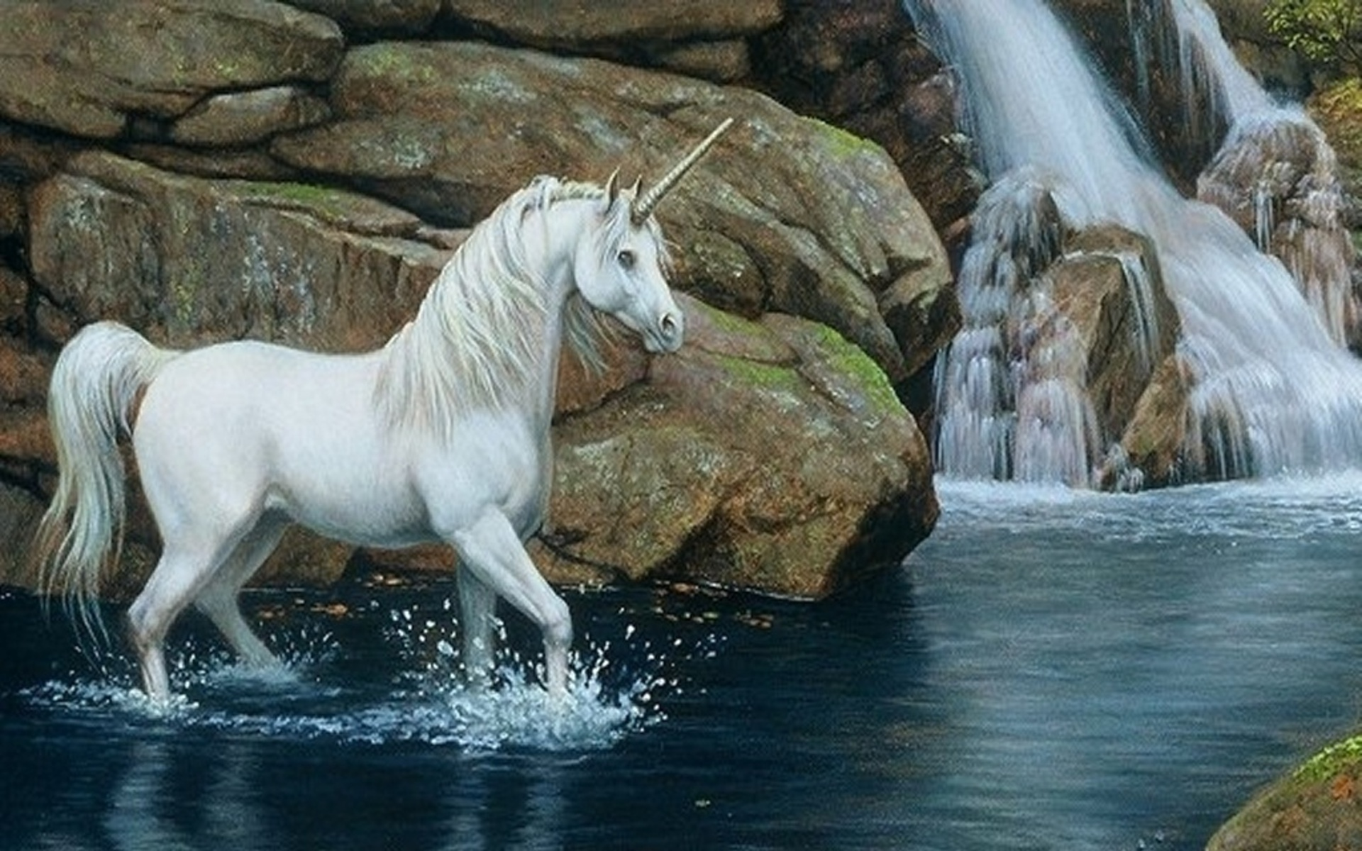 White Horse Wallpaper Wallpaper Free Download 1920x1200