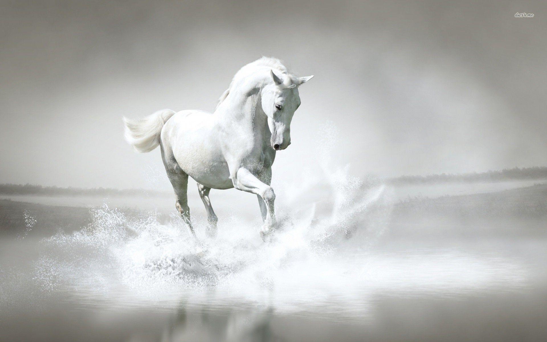 horse wallpaper best hd wallpaper 1920x1200