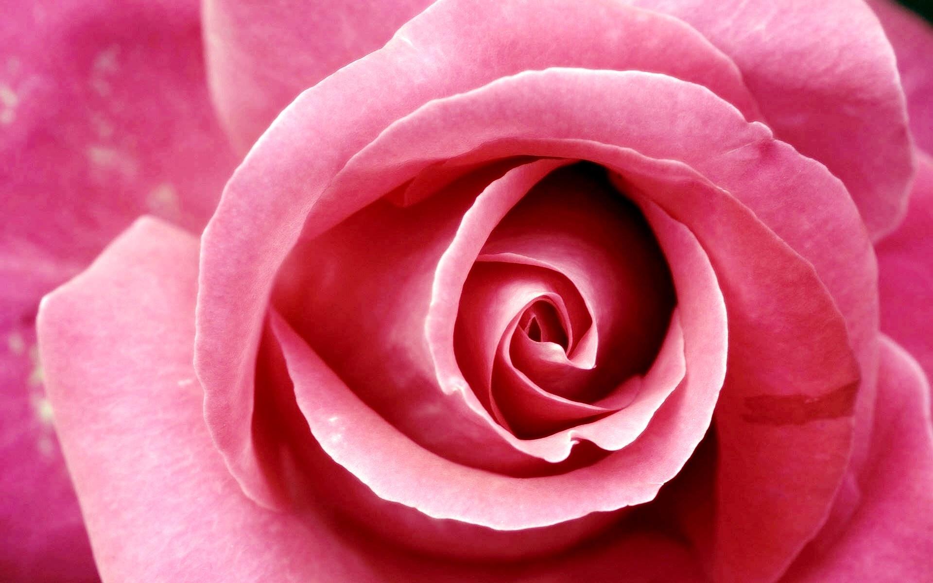 Ideas about pink flower wallpaper on pinterest flora 1920x1200 mightylinksfo