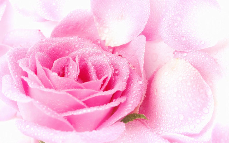 Hot pink flower arrangement flowers nature background 1440x900 mightylinksfo