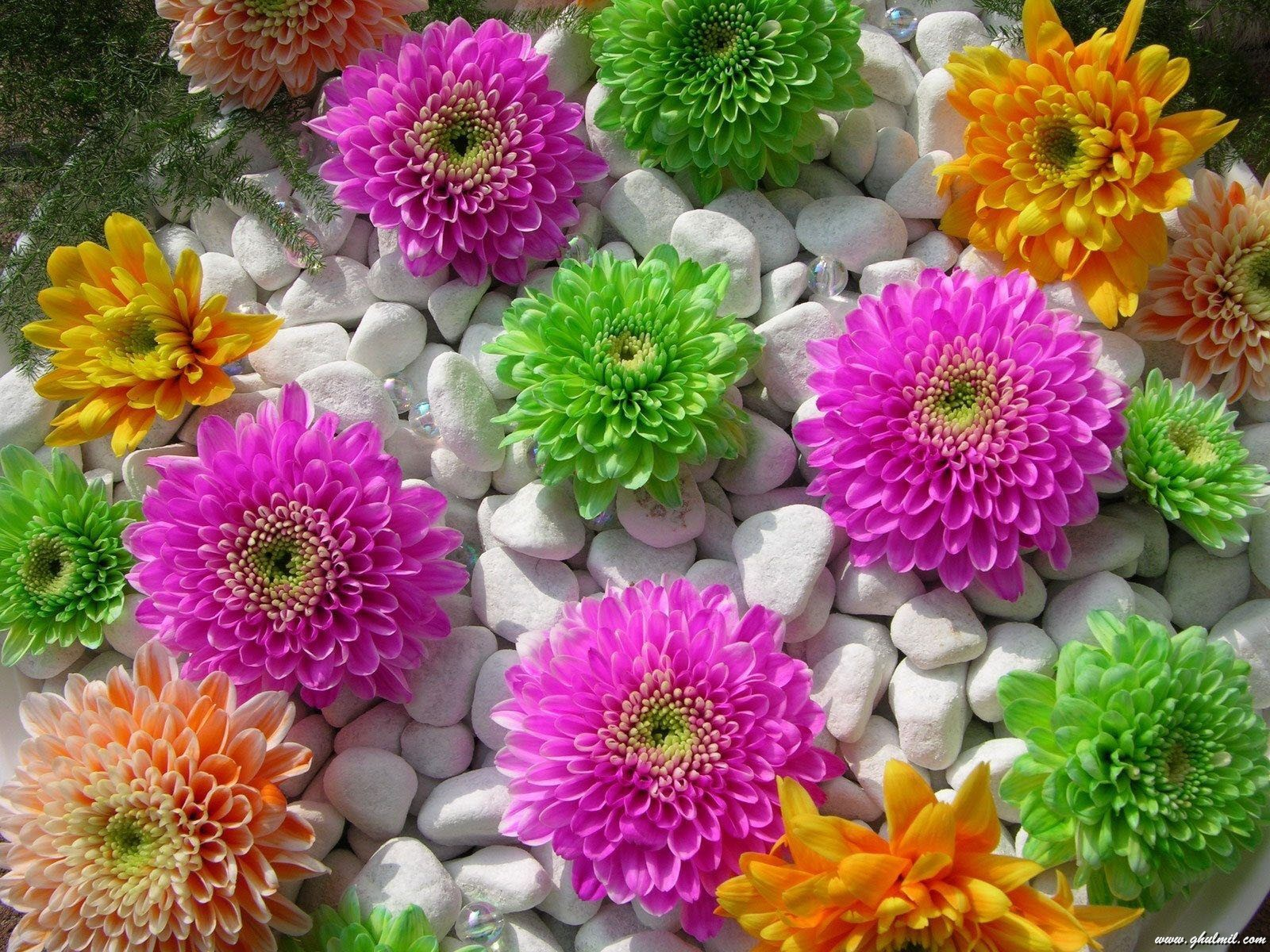 Beautiful Flowers Wallpapers  Android Apps on Google Play 1600x1200