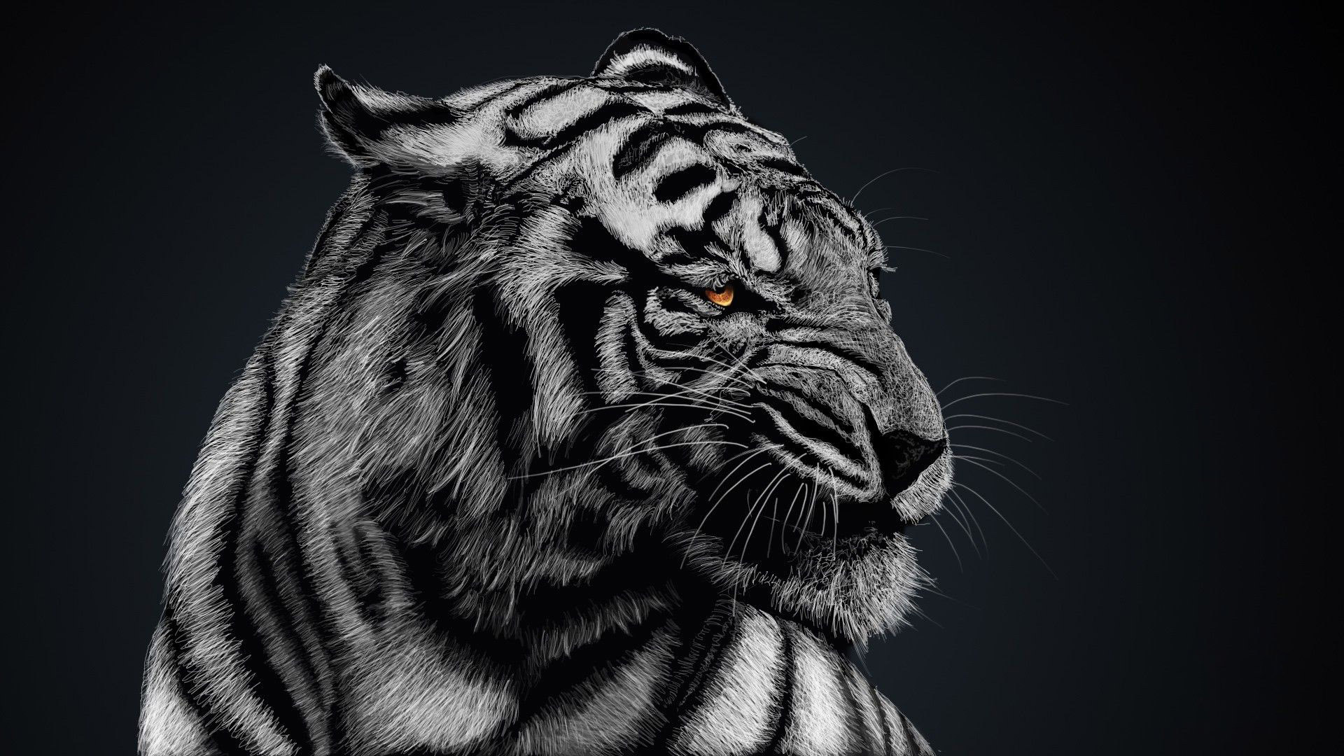 Tiger HD Wallpapers  Backgrounds  Wallpaper  1920x1080