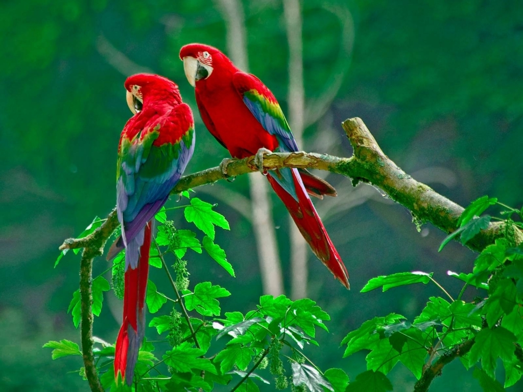 Free Download Love Birds Wallpapers  Litle Pups 1024x768