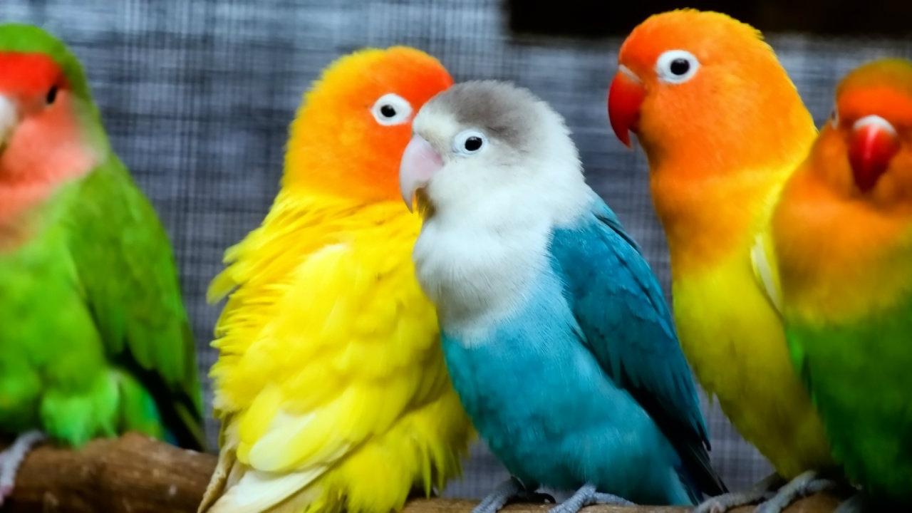 Love Birds Hd Wallpapers Beautiful Loving Birds Wallpapers Hd 1280x720