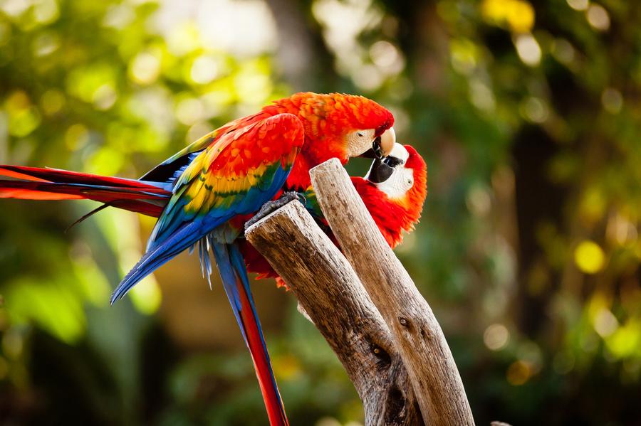 Love Birds Wallpapers Download Love Birds Wallpapers Wallpaper Info