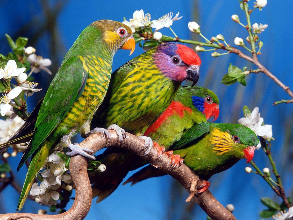 Totally Beautiful Parrot Wallpapers  Travelization 1024x768