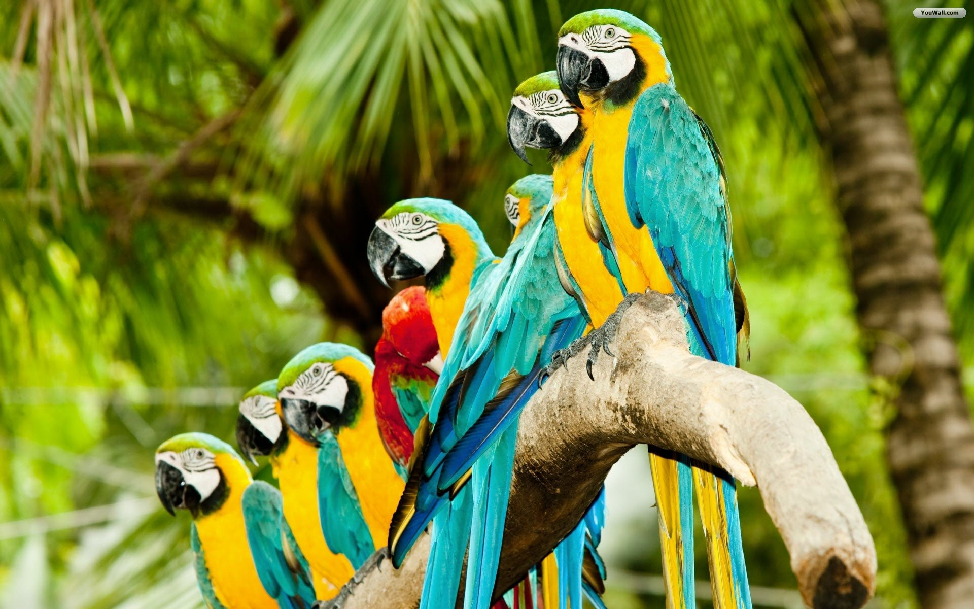 Lovely parrots Wallpapers  Pictures 1920x1200