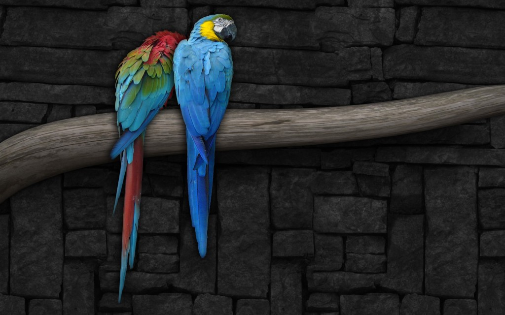 Beautiful Parrot HD Wallpapers That You Will Surely Love 1024x640