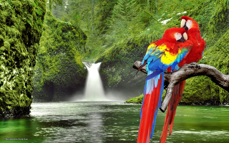 Colorful Parrot Images, Photos And Free Wallpapers 800x500