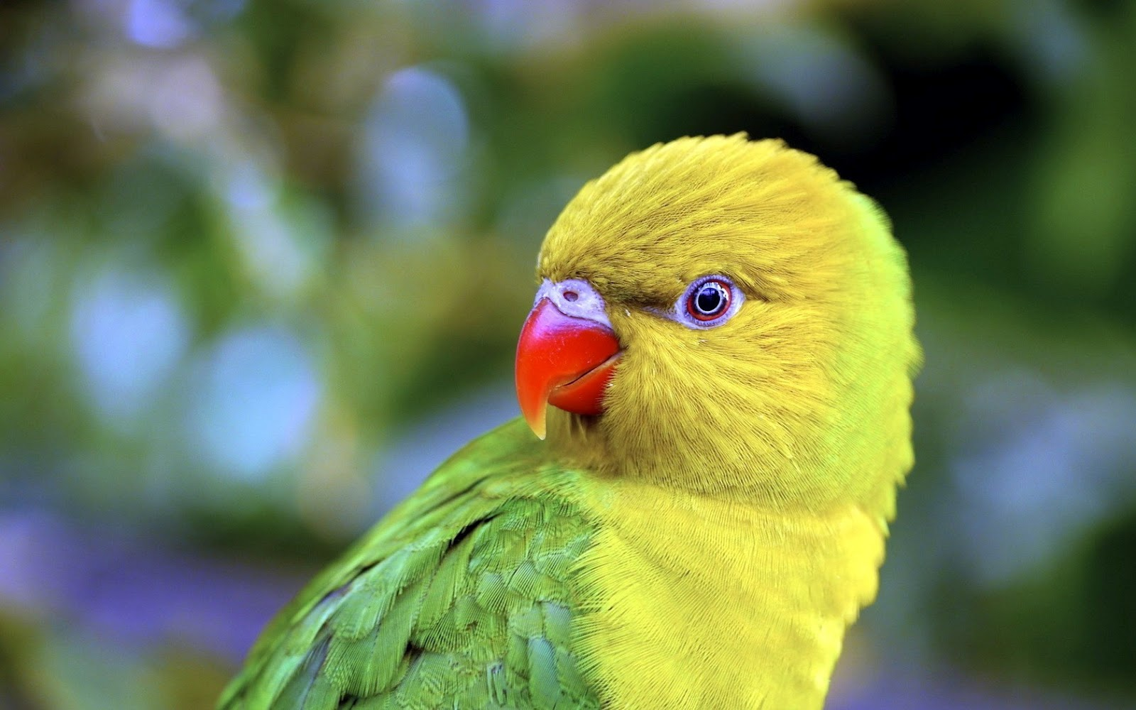 Totally Beautiful Parrot Wallpapers  Travelization 1600x1000