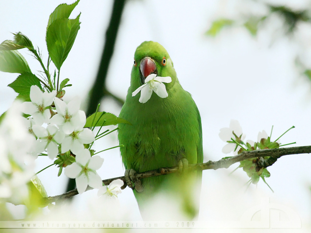 Beautiful Parrot HD Wallpapers That You Will Surely Love 1024x768