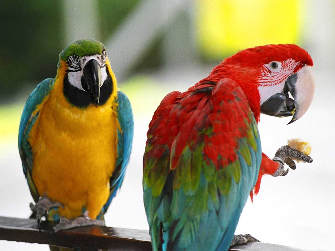 Amazing Parrots Wallpapers  Android Apps on Google Play 1280x960