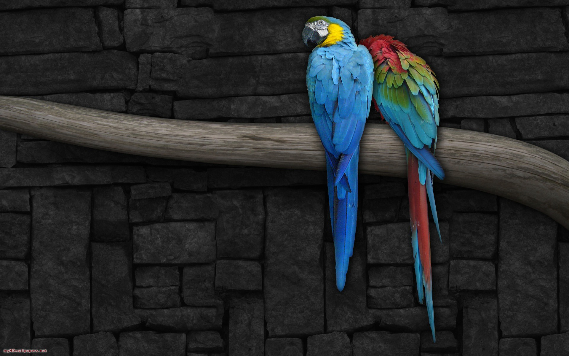 Parrot Wallpapers  Free Download Colorful Birds HD Desktop Images 1920x1200