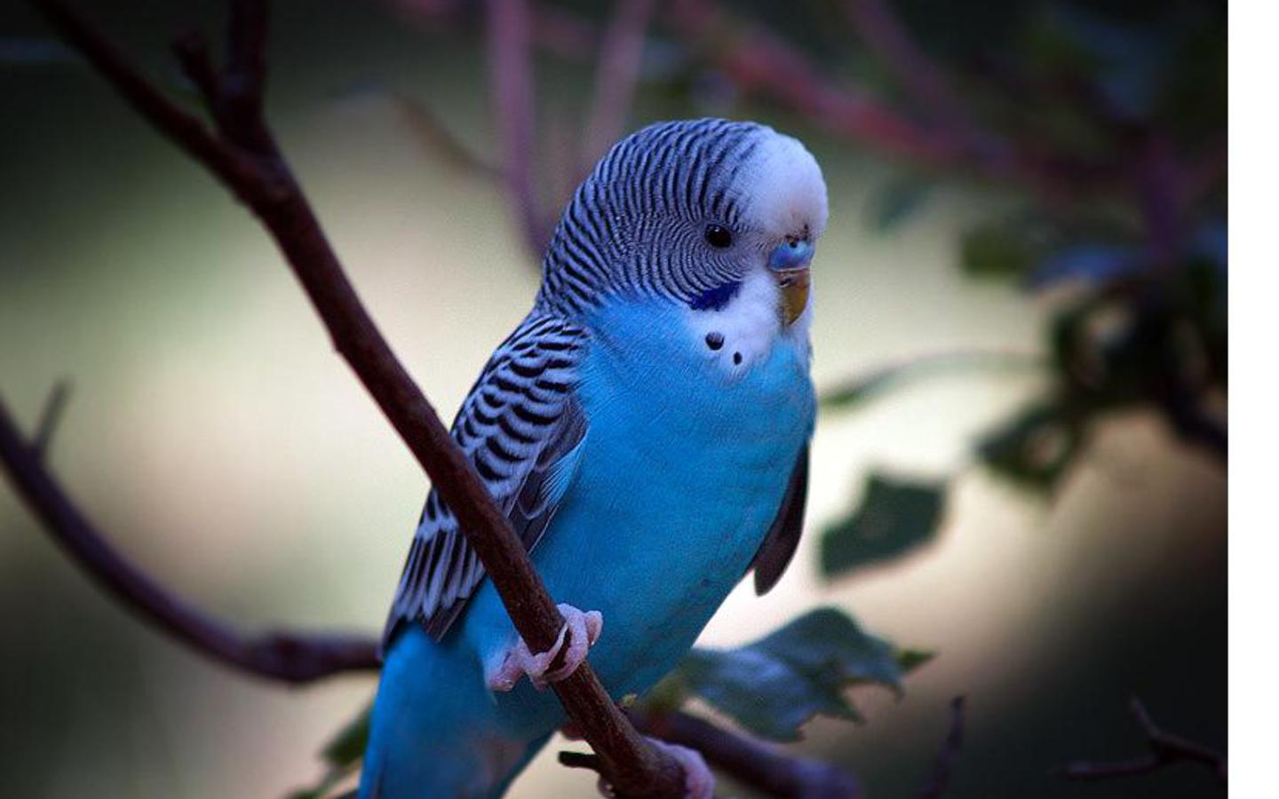 Parrot Wallpapers  Pets Cute and Docile 1440x900