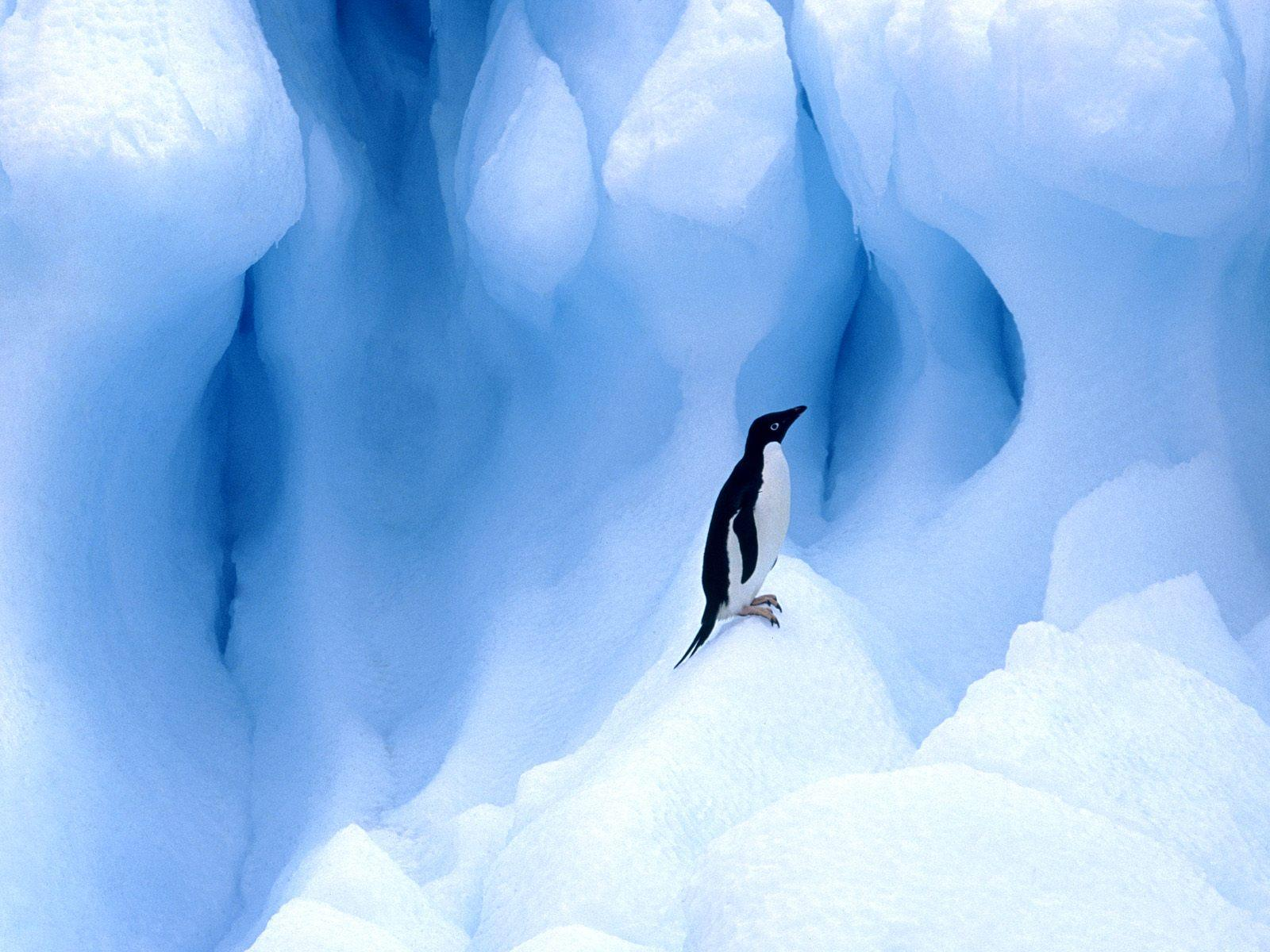 Penguin Wallpapers HD Pictures  One HD Wallpaper Pictures 1600x1200
