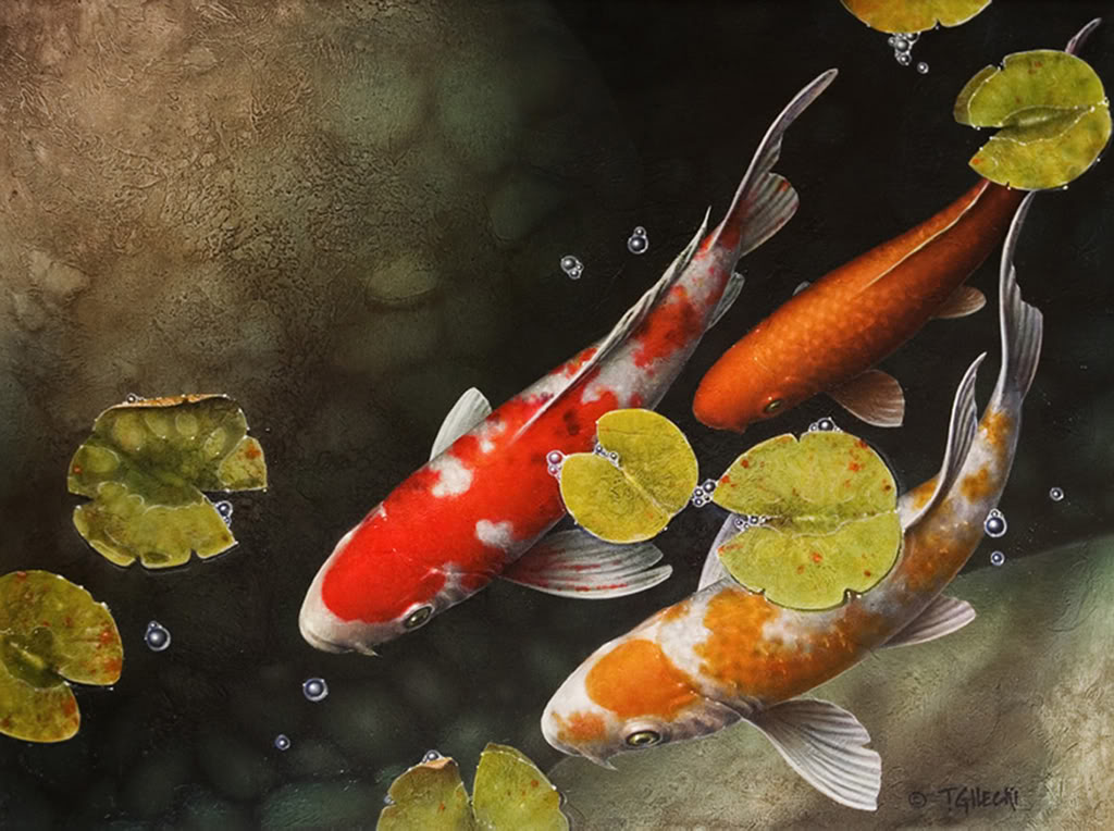 Koi wallpaper 38 wallpapers adorable wallpapers for Koi fish wallpaper