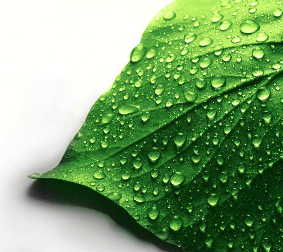 Images, Wallpapers of Leave in HD Quality: B leaf wallpaper 960x854