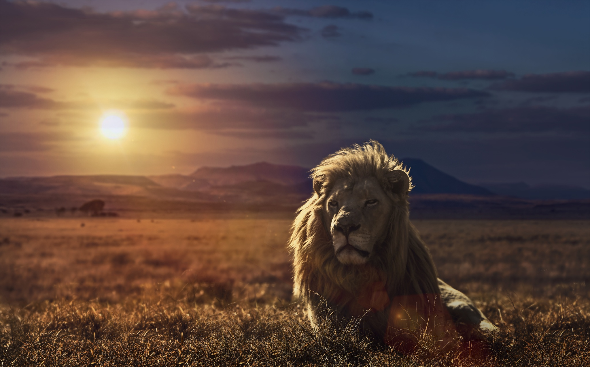 Lion King Galaxy Wallpaper By Hd Wallpapers Daily 2048x1277