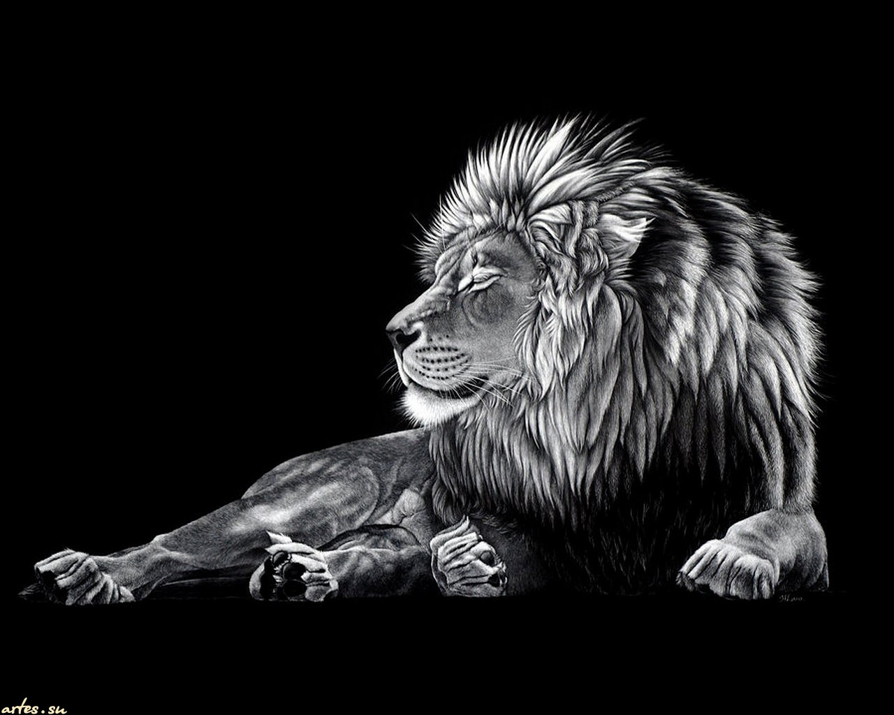 Lion Hd Wallpapers Lion Hd Pictures Free Download Hd 1280x1024