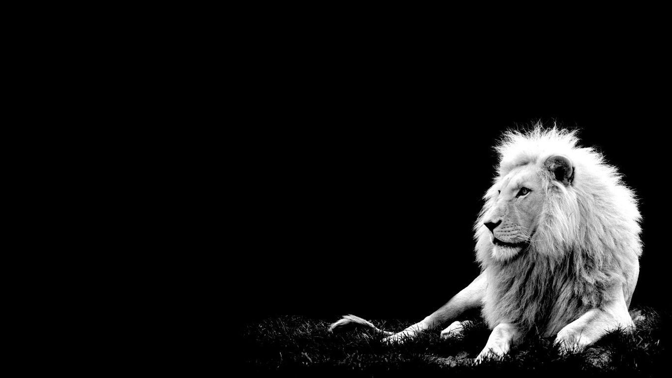 Lion Wallpaper Wallpapers For Free Download About Wallpapers Lion Hd