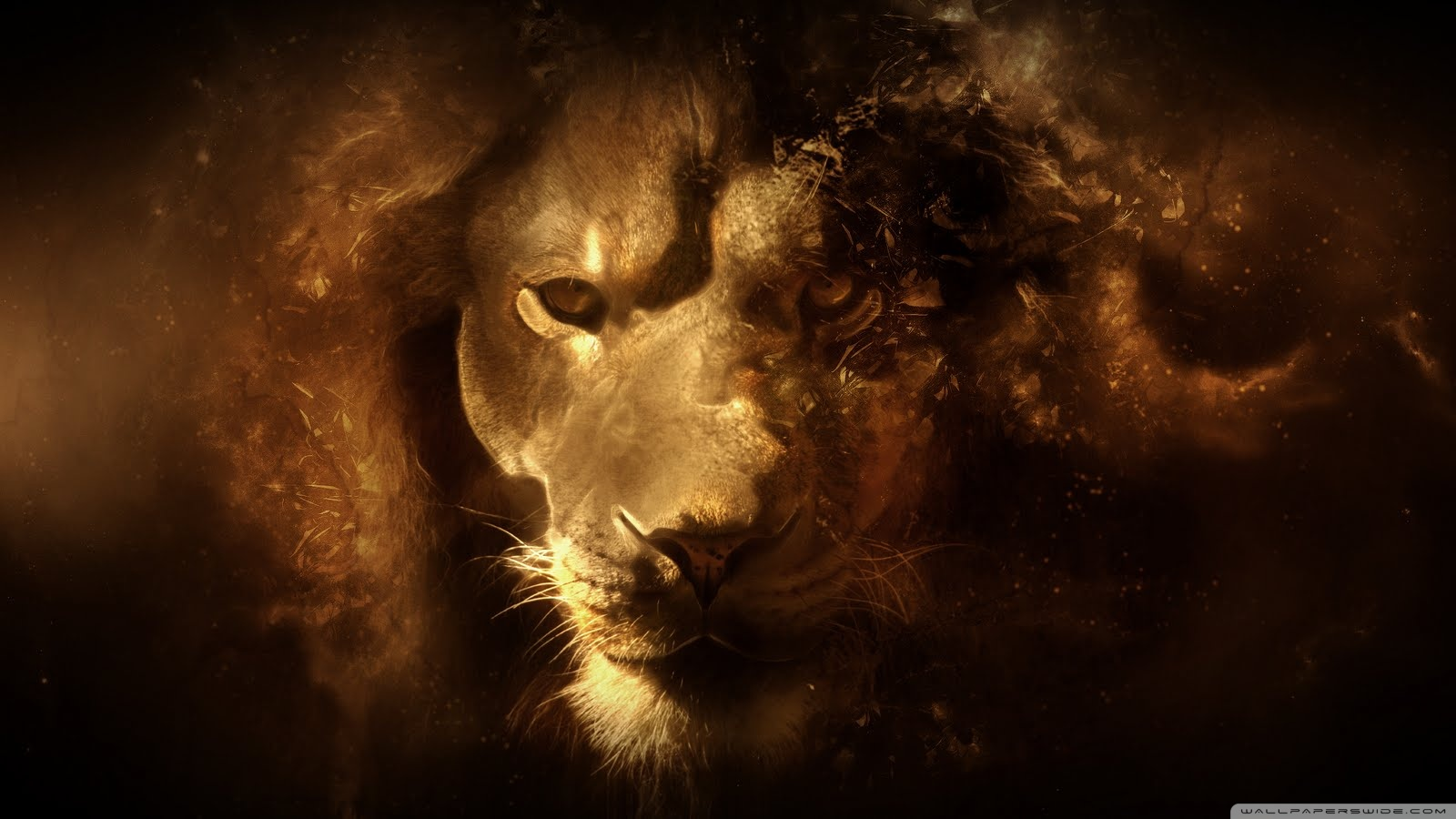 lion hd wallpapers 1600x900