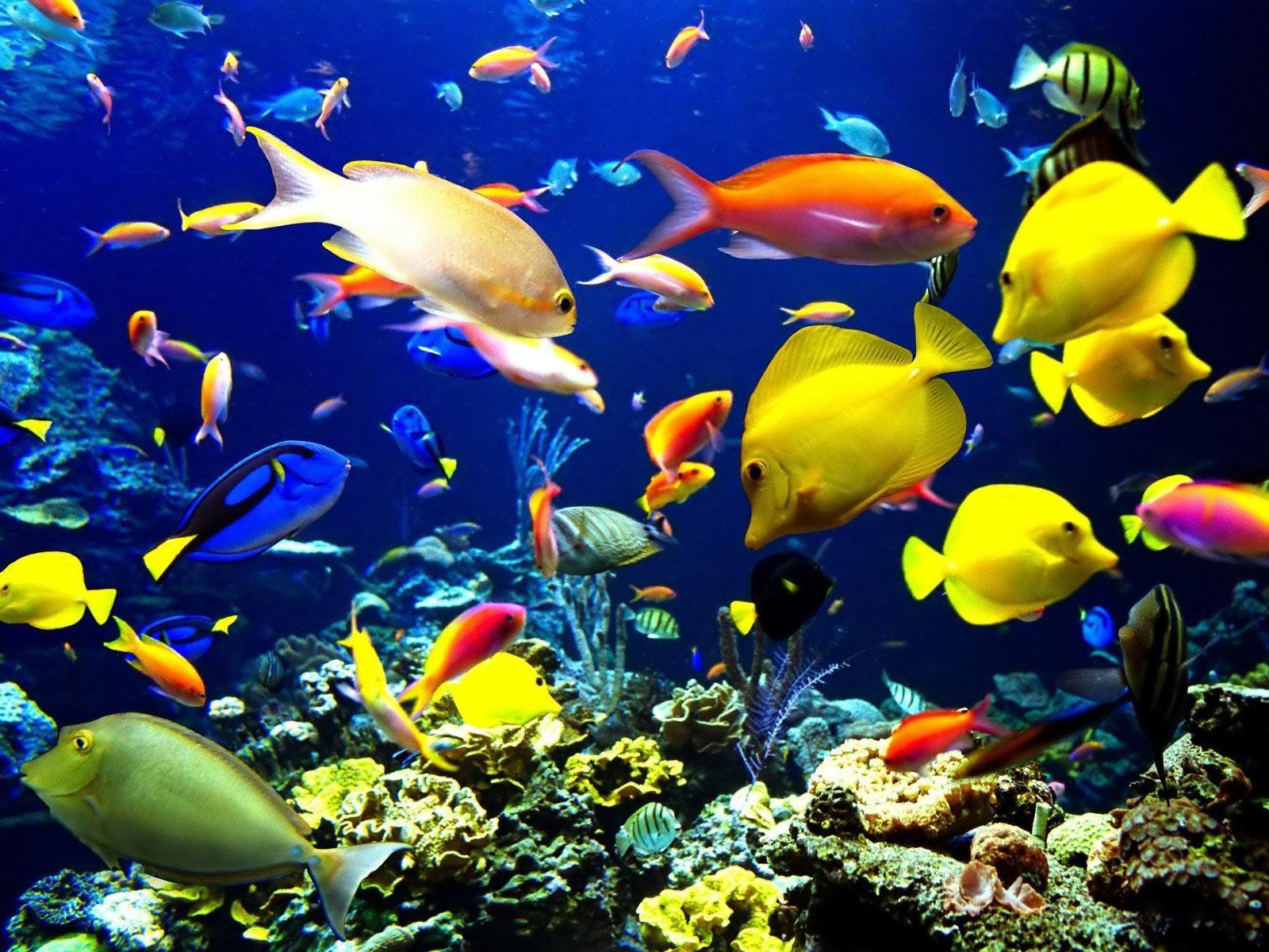 Live Aquarium Wallpaper 4 Wallpapers