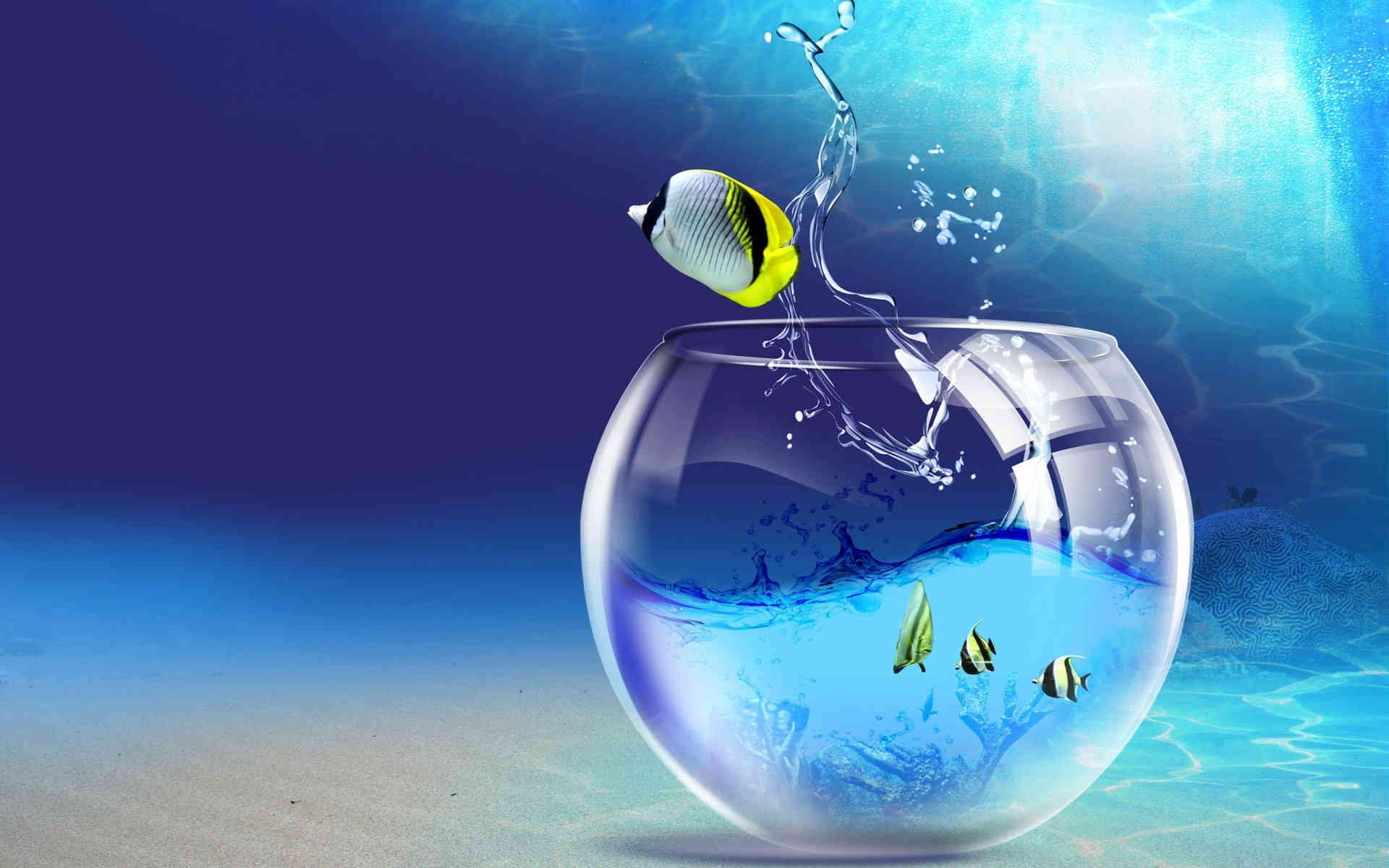 Desktop Live Wallpaper Free Download Ccfabu Aquarium Fish Live