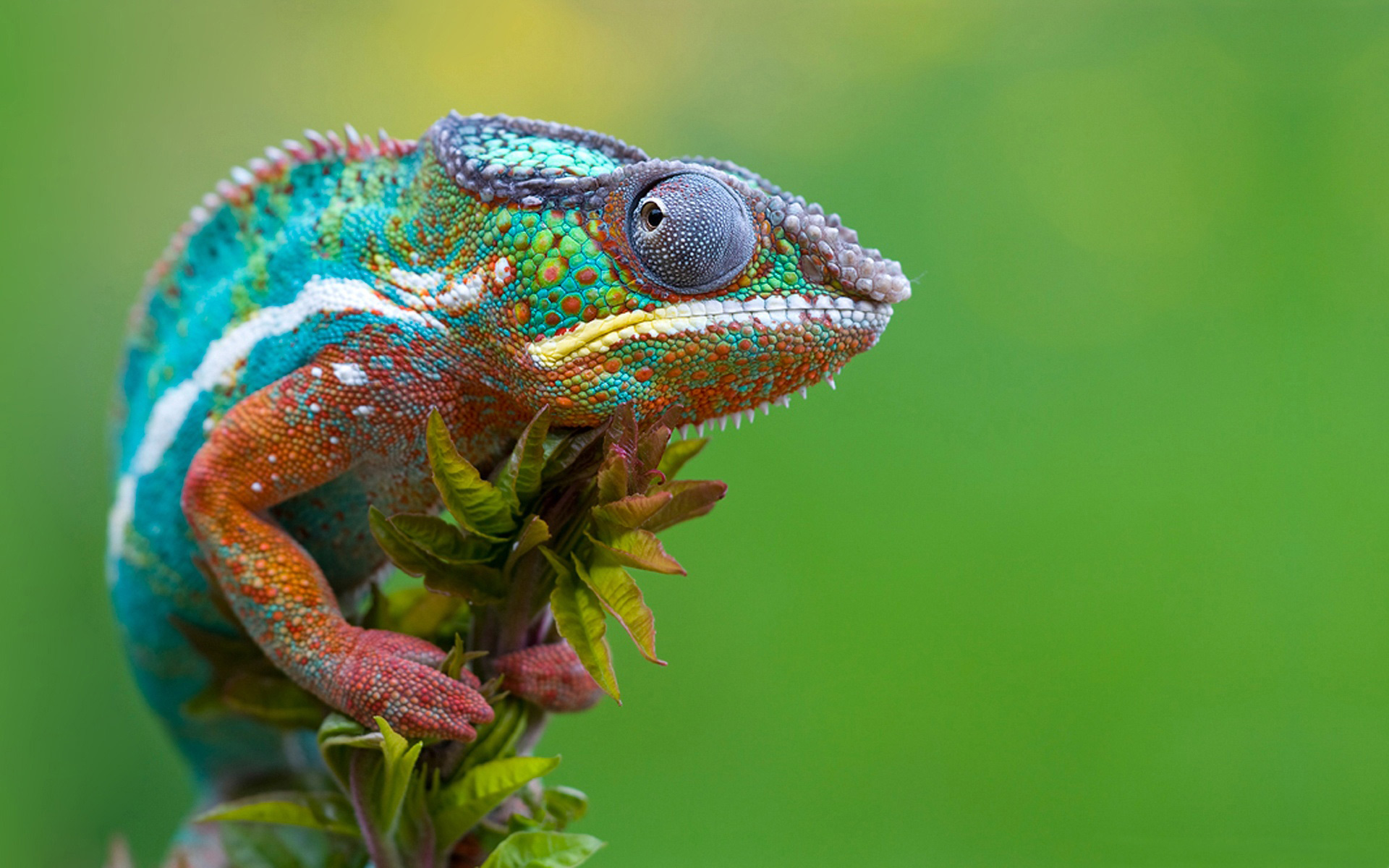 HD Lizard Wallpapers  Animals Library 1920x1200