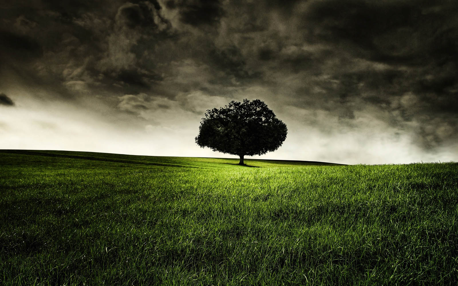 lonely wallpapers, desktop wallpaper » GoodWP Trees Black And White Wallpaper 1600x1000