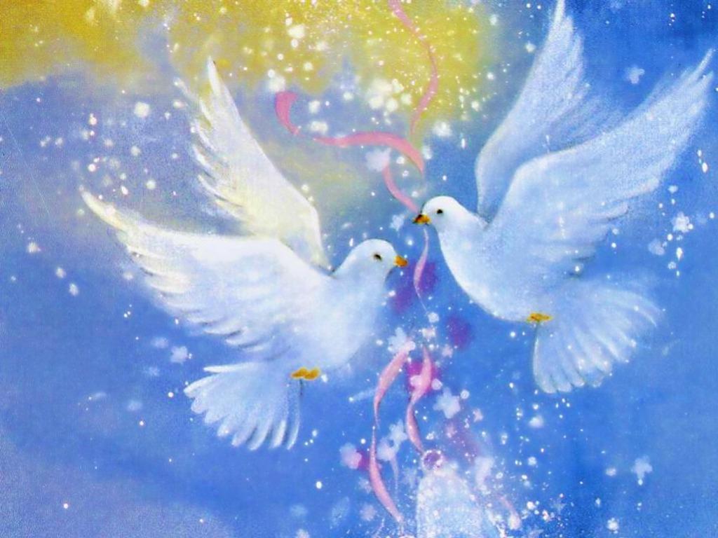 Love Birds Wallpaper Love Birds Wallpapers Free Download 1024x768