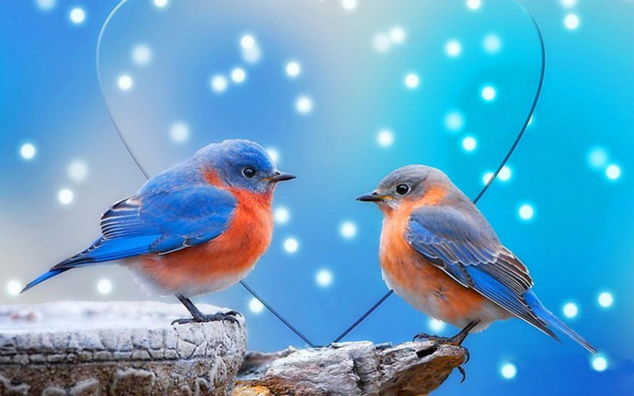 Great Wallpaper Love Parrot - Love-Birds-Wallpaper-050  Pictures_597049.jpg