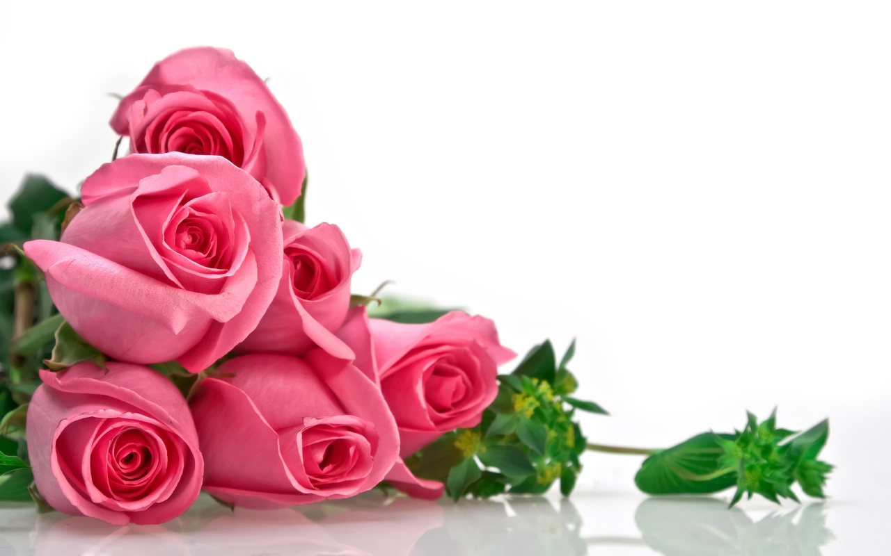 Pink Rose Flowers Love Wallpaper For Desktop Hd Love Wallpapers