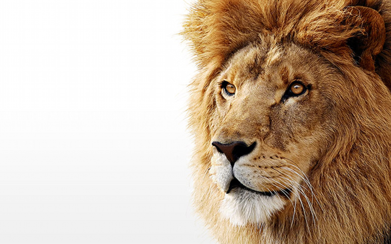Os X Mountain Lion Hd Desktop Wallpaper High Definition 1280x800