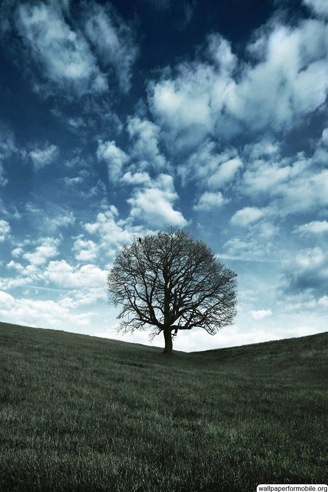 Mobile Nature Wallpaper Hd 640x960