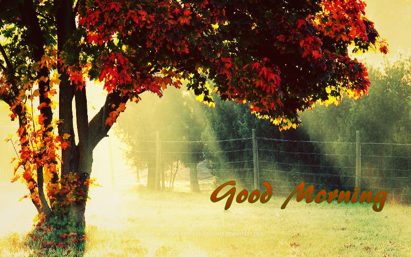 Best Good Morning Images, Pics Collection  Best Whatsapp Status 800x500