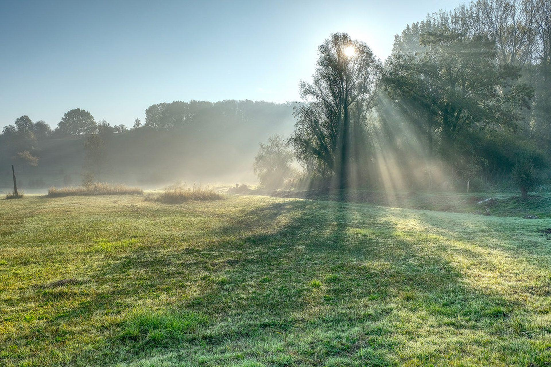 Wallpaper the sun rays trees landscape nature fog